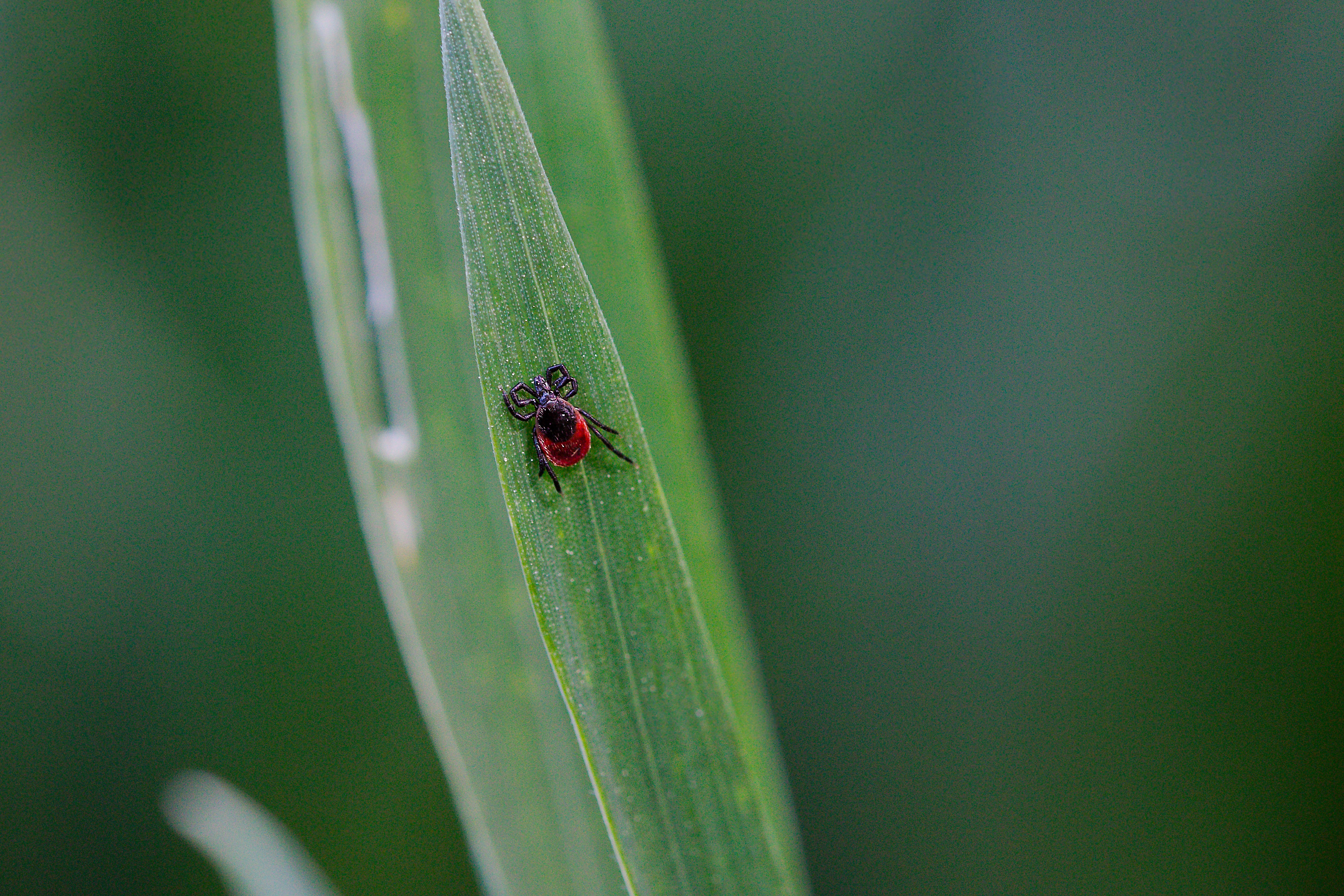 Outdoor Pests: Ticks & Their Diseases